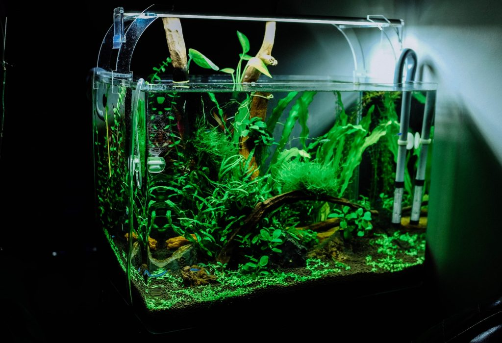 A small aquarium